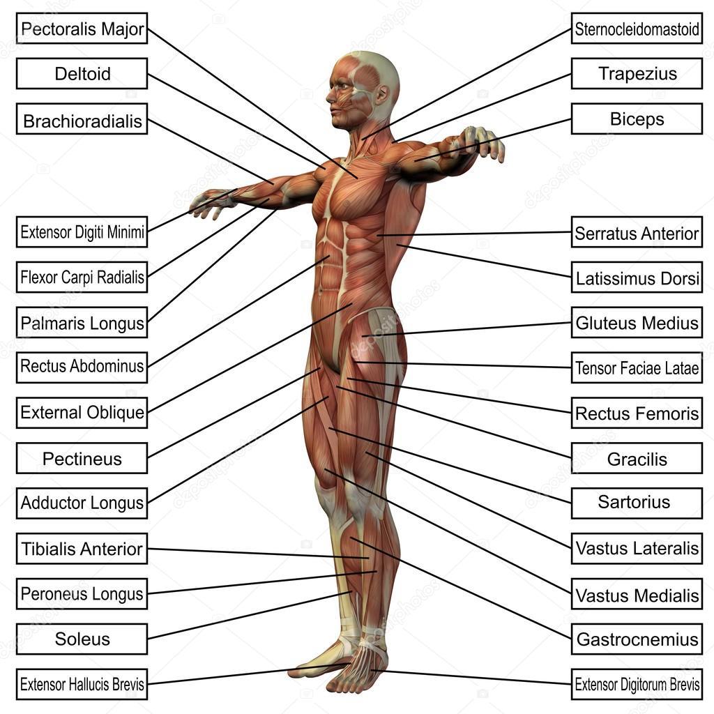 hombre con músculos y texto — Fotos de Stock © design36 #69914269