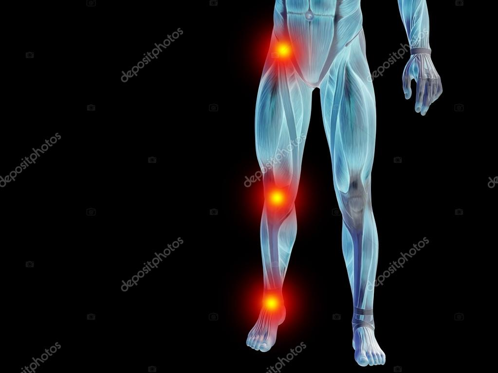 Anatomy Lower Body Or Health Design Stock Photo Design36 69914493