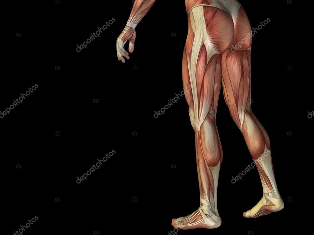 Unterkörper mit Muskeln — Stockfoto © design36 #70374145