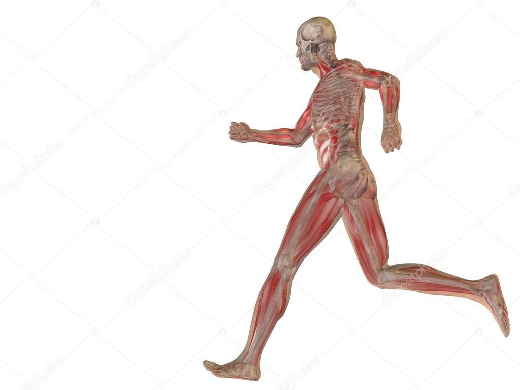 konzeptionelle Mensch Anatomie — Stockfoto © design36 #70374219