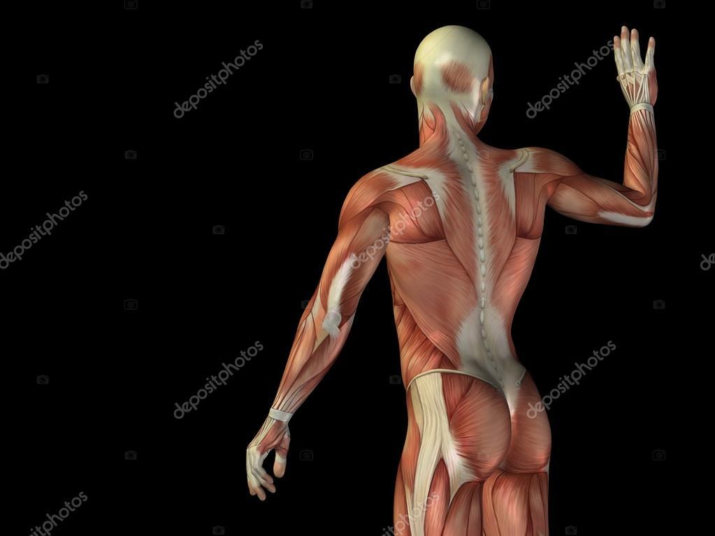 Oberkörper mit Muskeln — Stockfoto © design36 #70374837