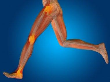 Conceptual human  anatomy