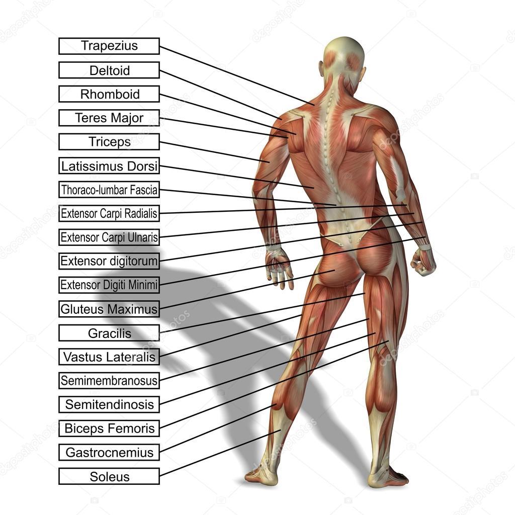 Mann mit Muskeln und text — Stockfoto © design36 #70911207