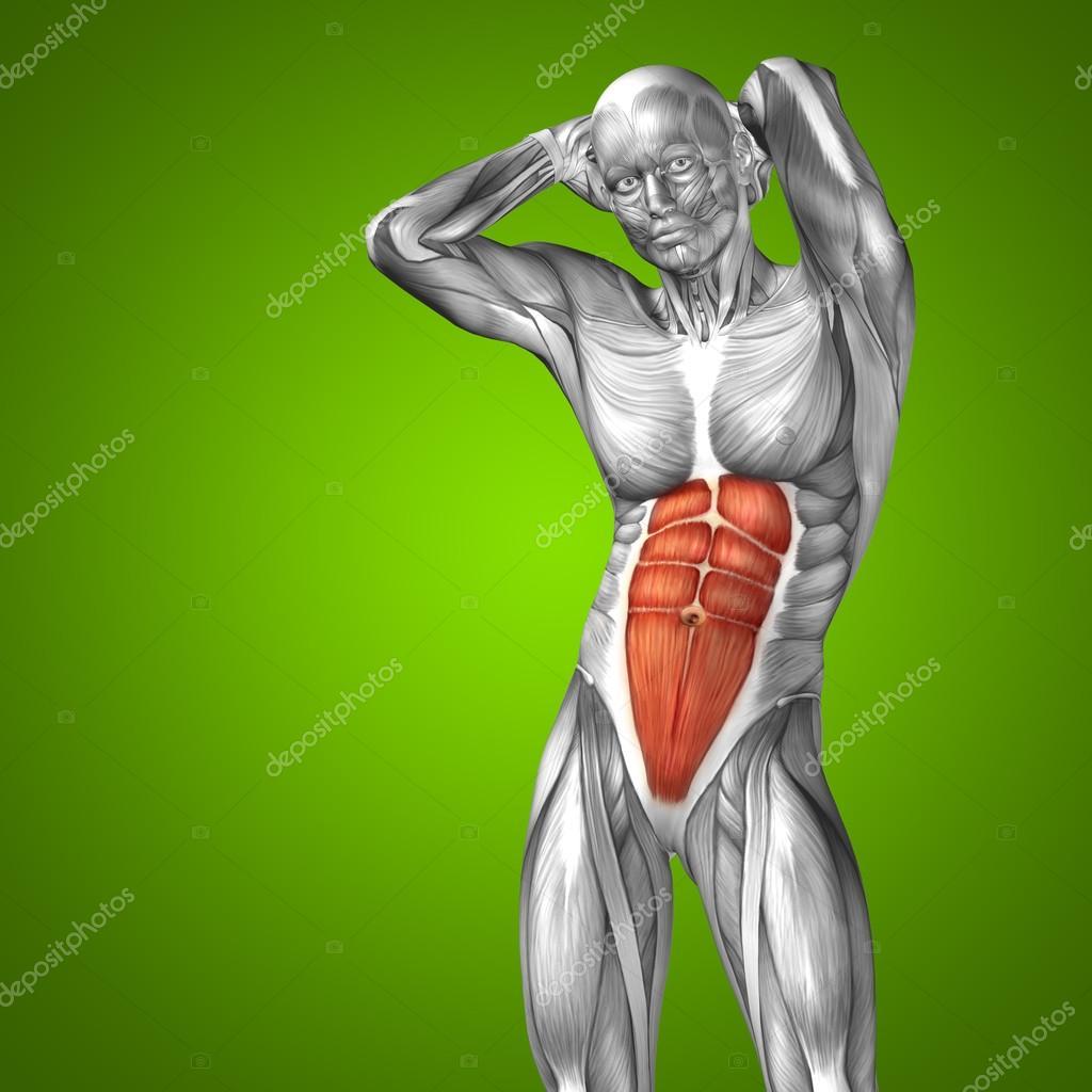 Konzeptionelle Brust menschliche Anatomie — Stockfoto © design36 ...