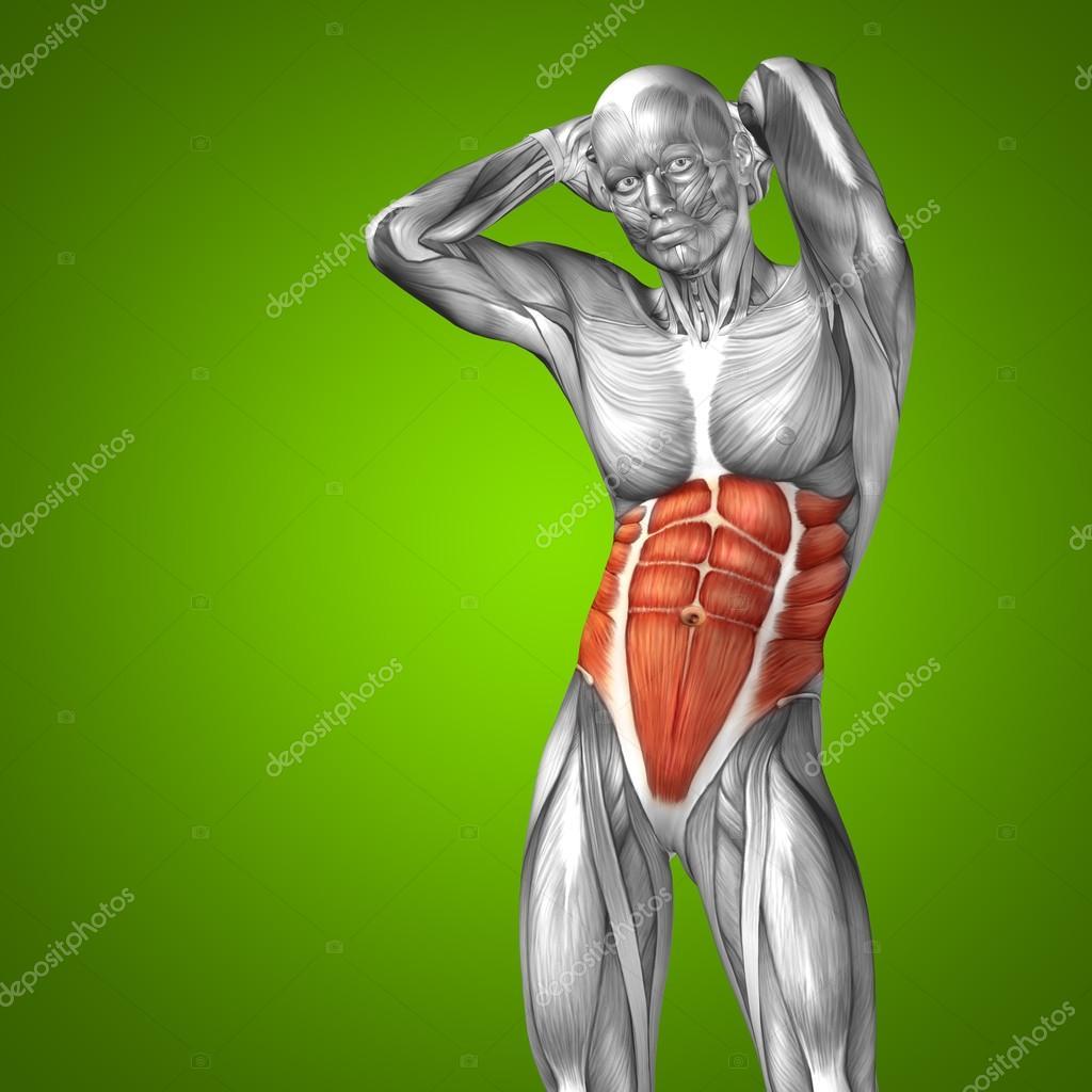 Anatomía conceptual de pecho — Foto de stock © design36 #70911831