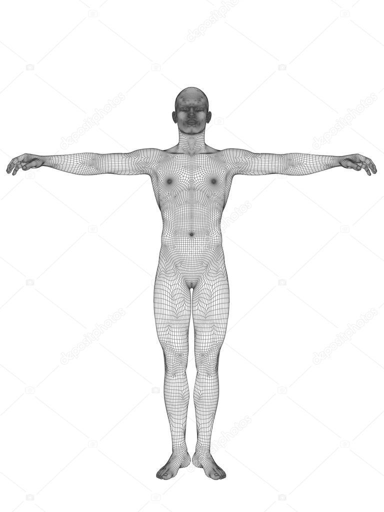 Mensch oder männliche Anatomie — Stockfoto © design36 #71478173