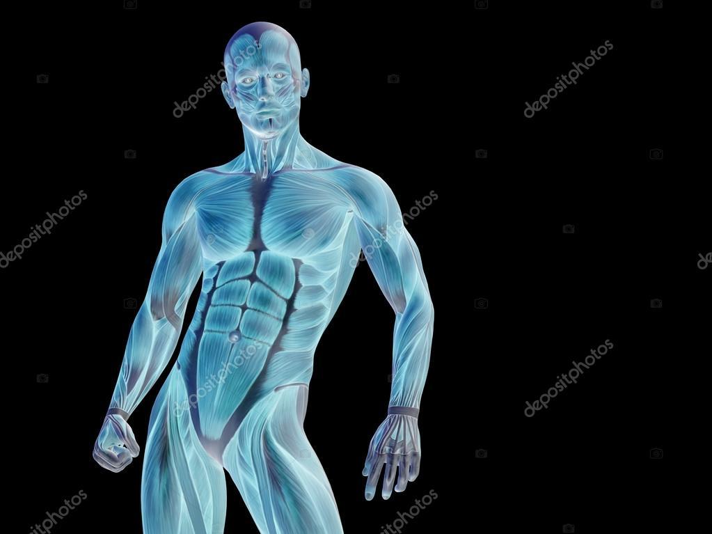 Stong Mann-3d anatomie-Oberkörper — Stockfoto © design36 #74381999
