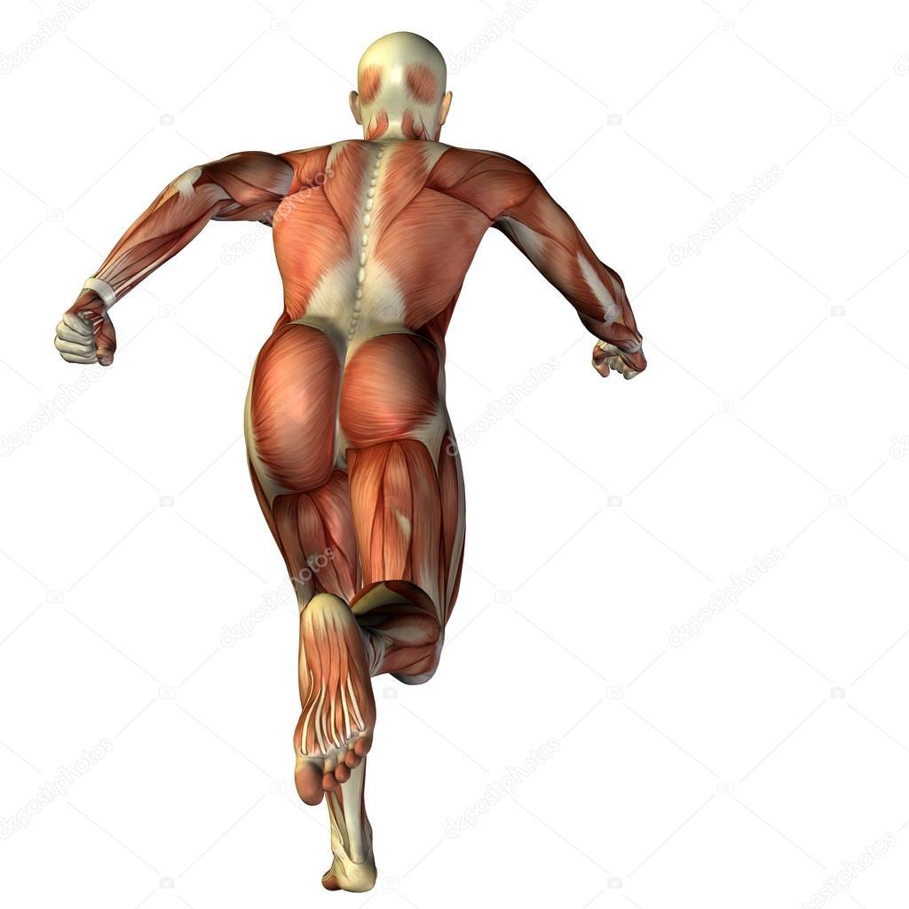 3D Mann mit Muskeln Anatomie — Stockfoto © design36 #74382185