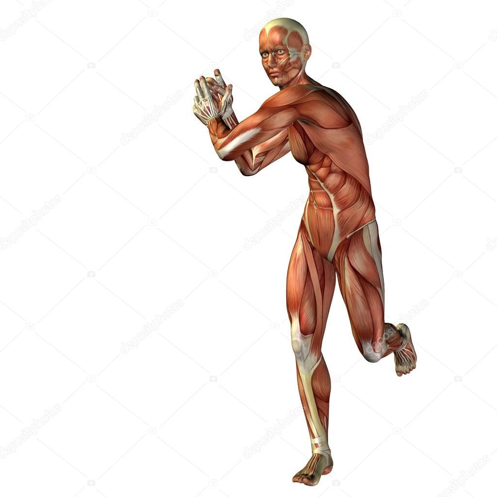 3D humanos u hombre con músculos para anatomía — Fotos de Stock ...