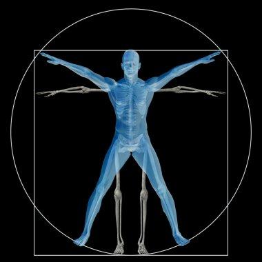 Vitruvian human  as a concept