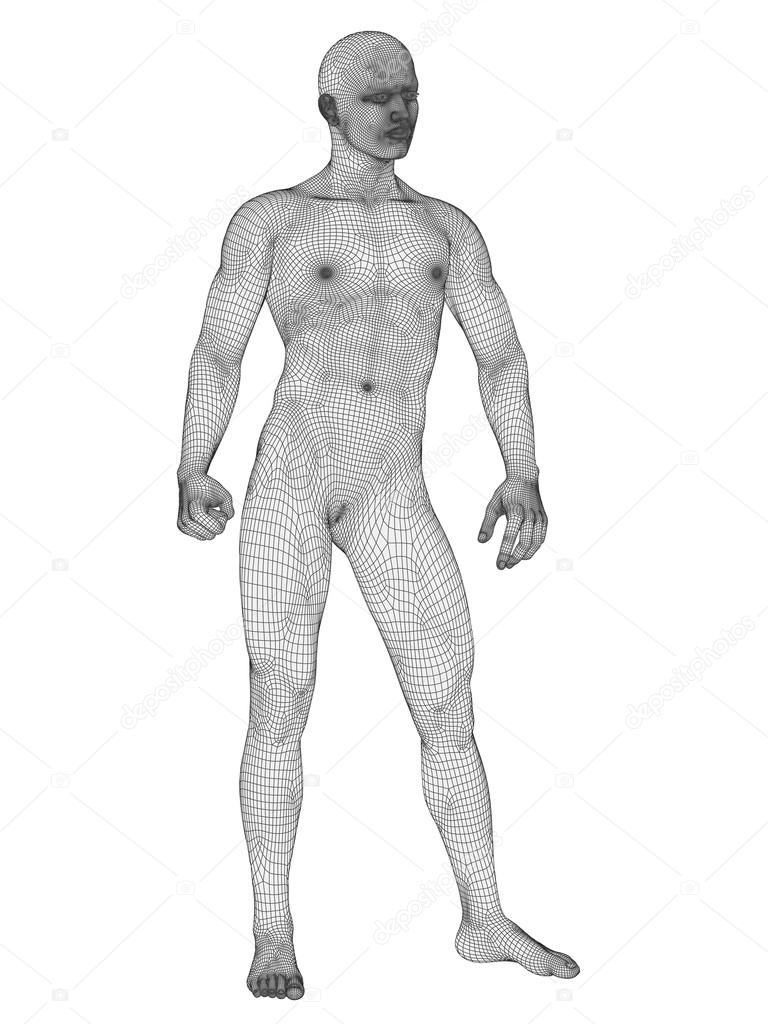 Anatomy Made Of White Wireframe Stock Photo Design36 76348903