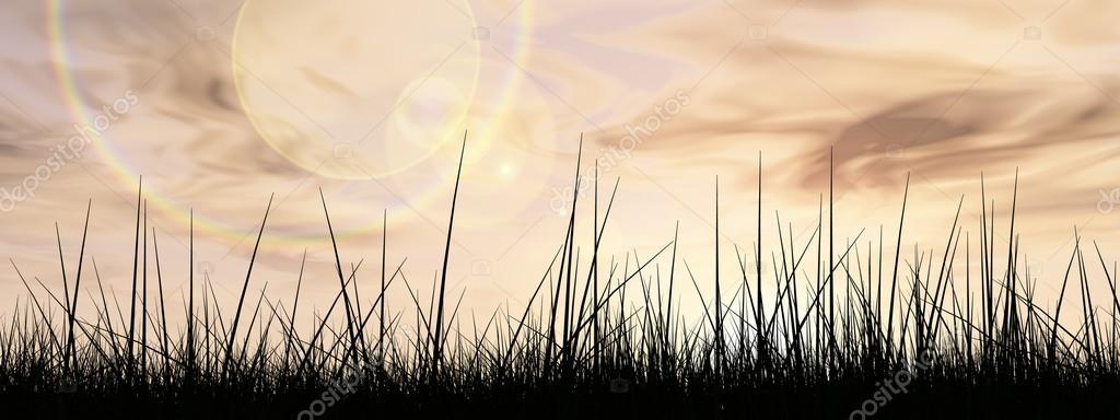 conceptual black grass  field