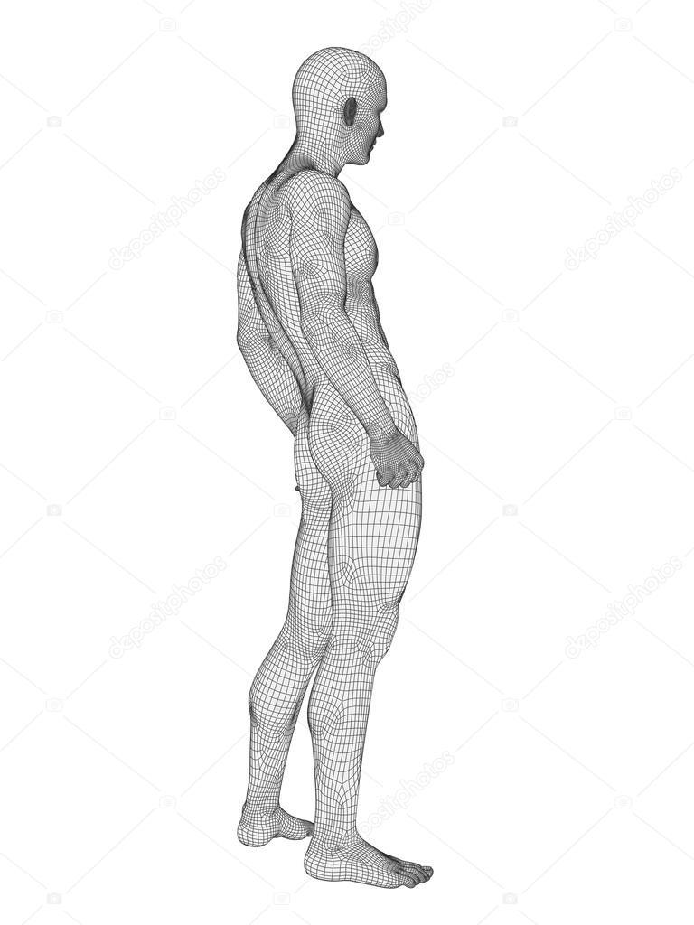 Anatomie des Menschen männlich — Stockfoto © design36 #81083500