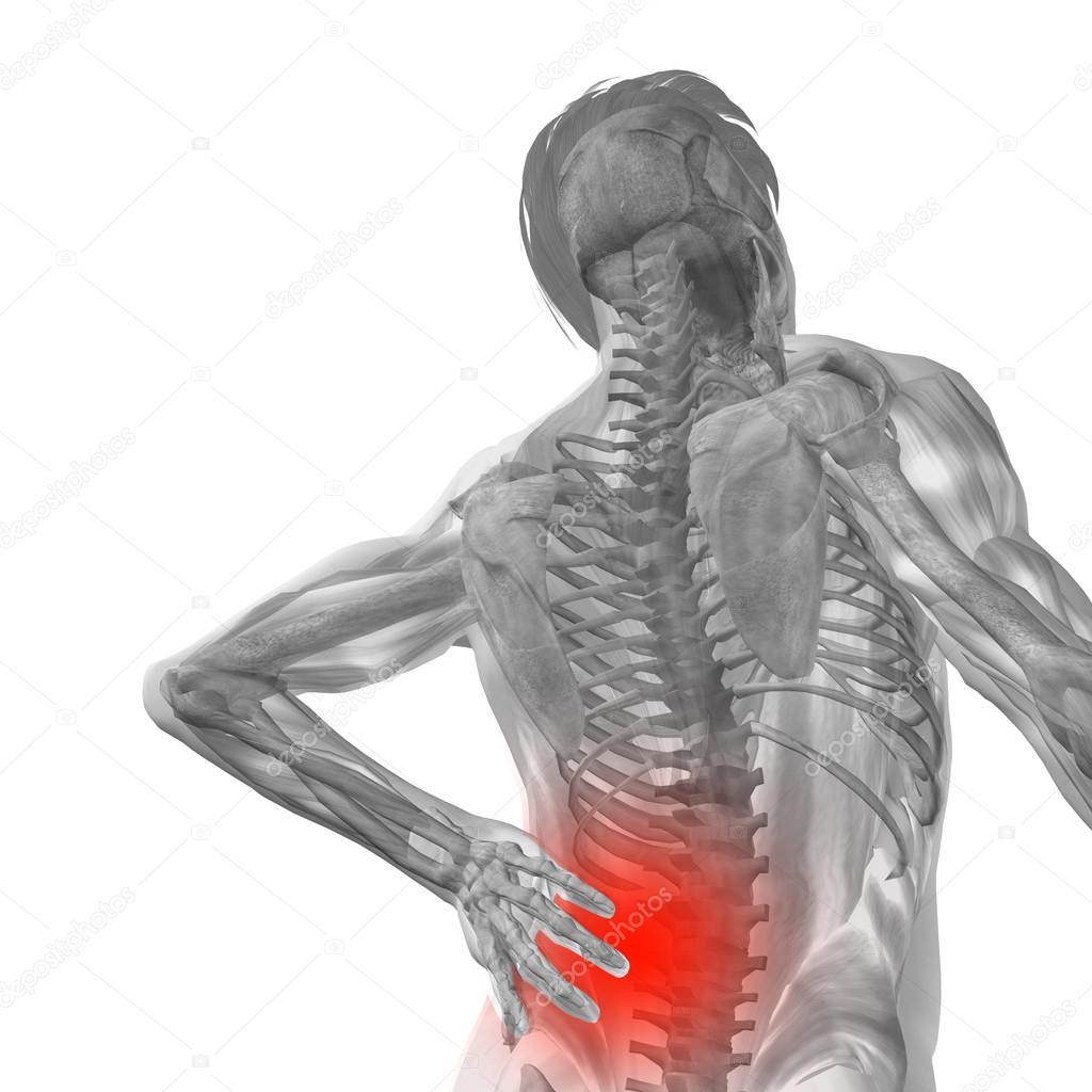 Anatomie der Menschen mit Rückenschmerzen — Stockfoto © design36 ...