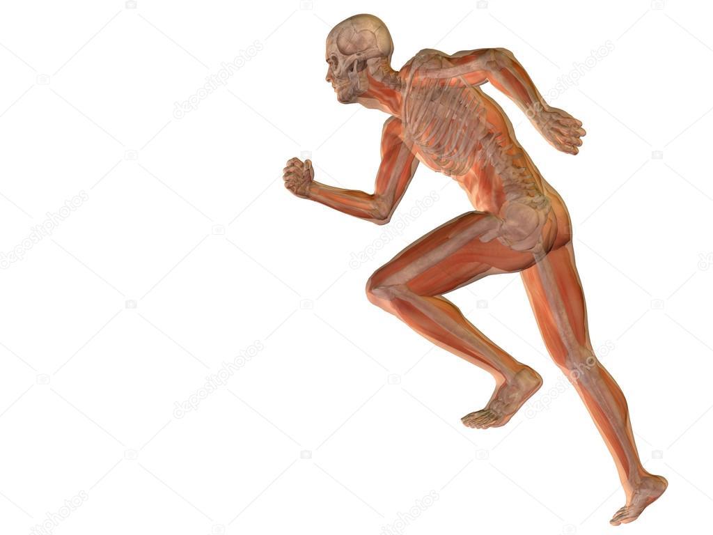 konzeptionell Mann oder menschliche Anatomie — Stockfoto © design36 ...