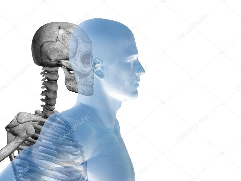 Anatomie mit Knochen und Skelett — Stockfoto © design36 #82546310