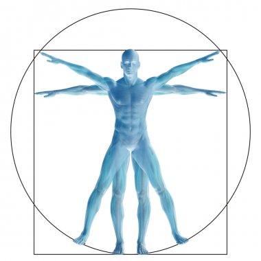 Vitruvian human  proportion anatomy body