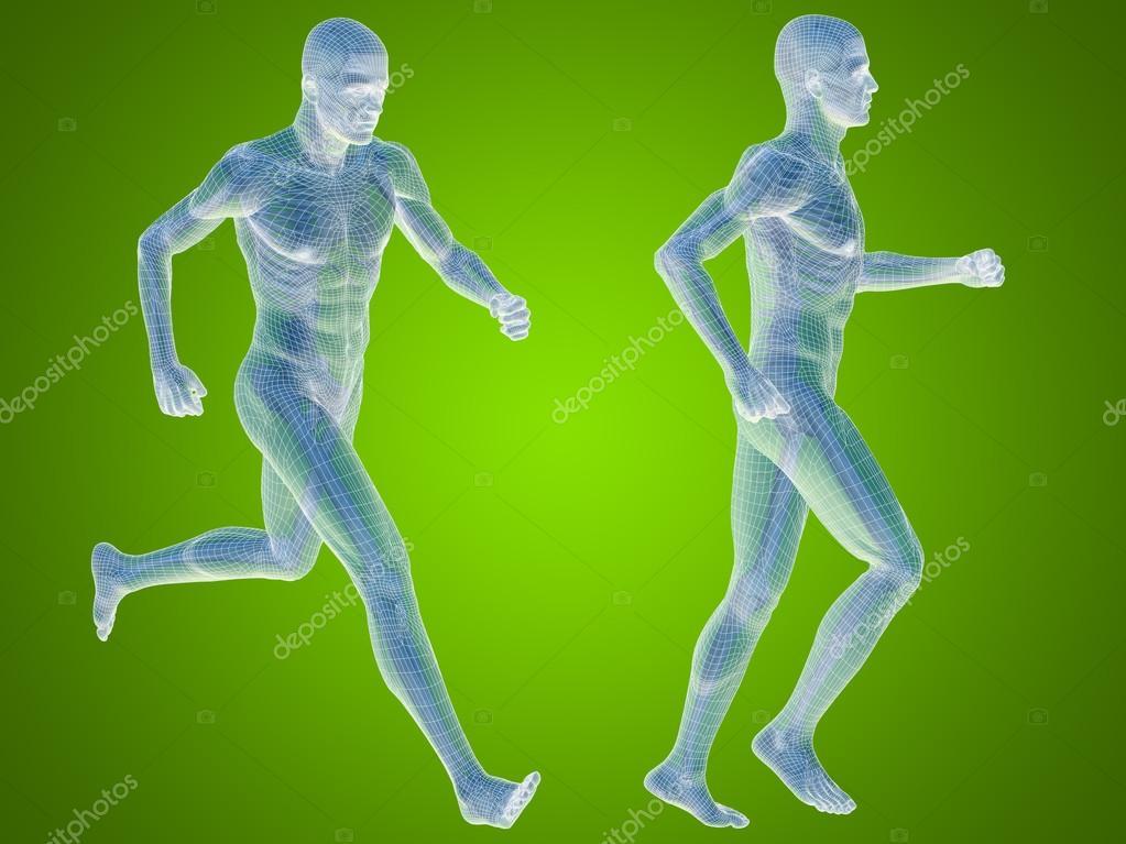 Male Skeleton Anatomy Stock Photo Design36 84378564