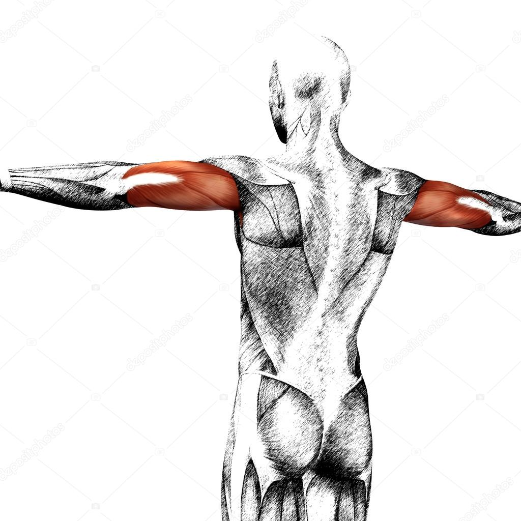 Konzept oder konzeptionelle menschliche Anatomie oder anatomische ...
