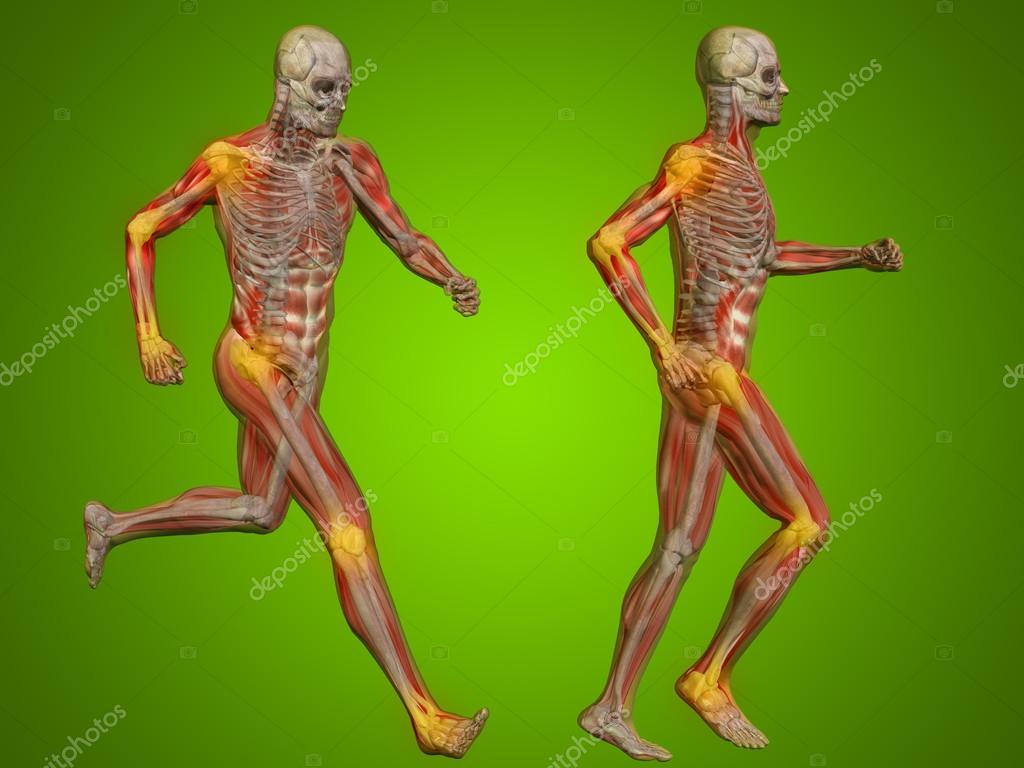 hombre humano o el hombre esqueleto Fotos de Stock design36