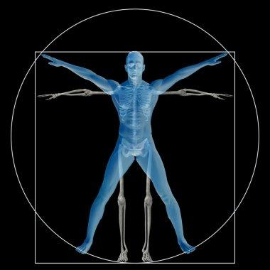 Vitruvian human and skeleton