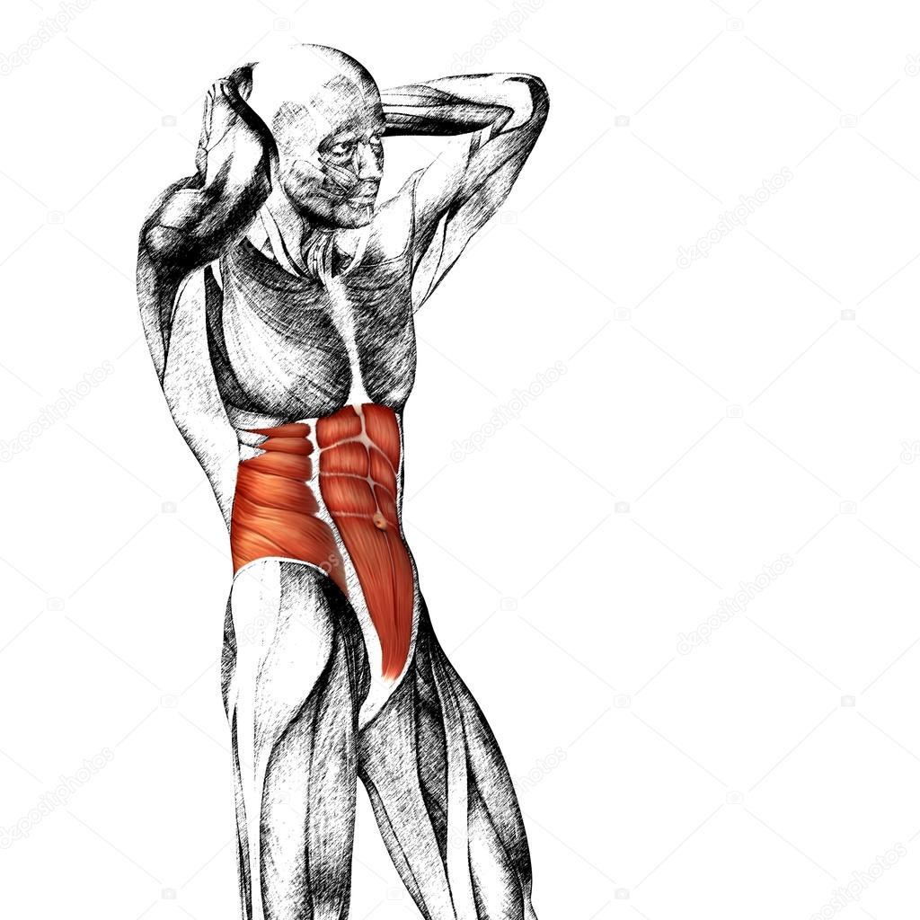 Menschliche Anatomie der Brust — Stockfoto © design36 #85995788