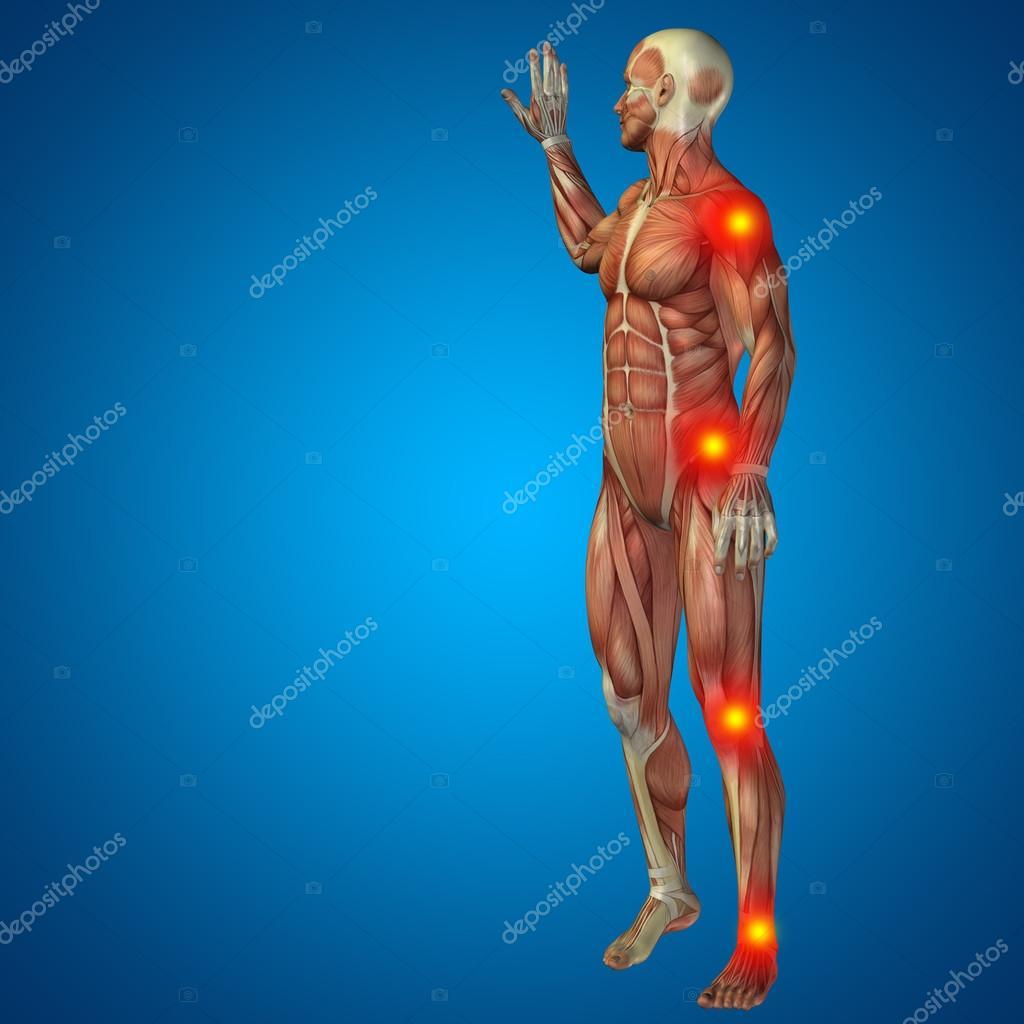 Mann mit Muskeln für Anatomie oder Gesundheit-Designs mit Gelenk ...