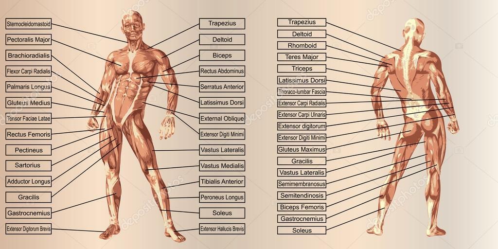 Bijles Anatomie met Bijleszoeker