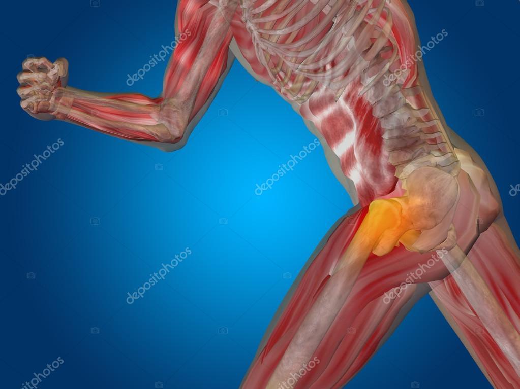 mann menschlich Anatomie — Stockfoto © design36 #88929634
