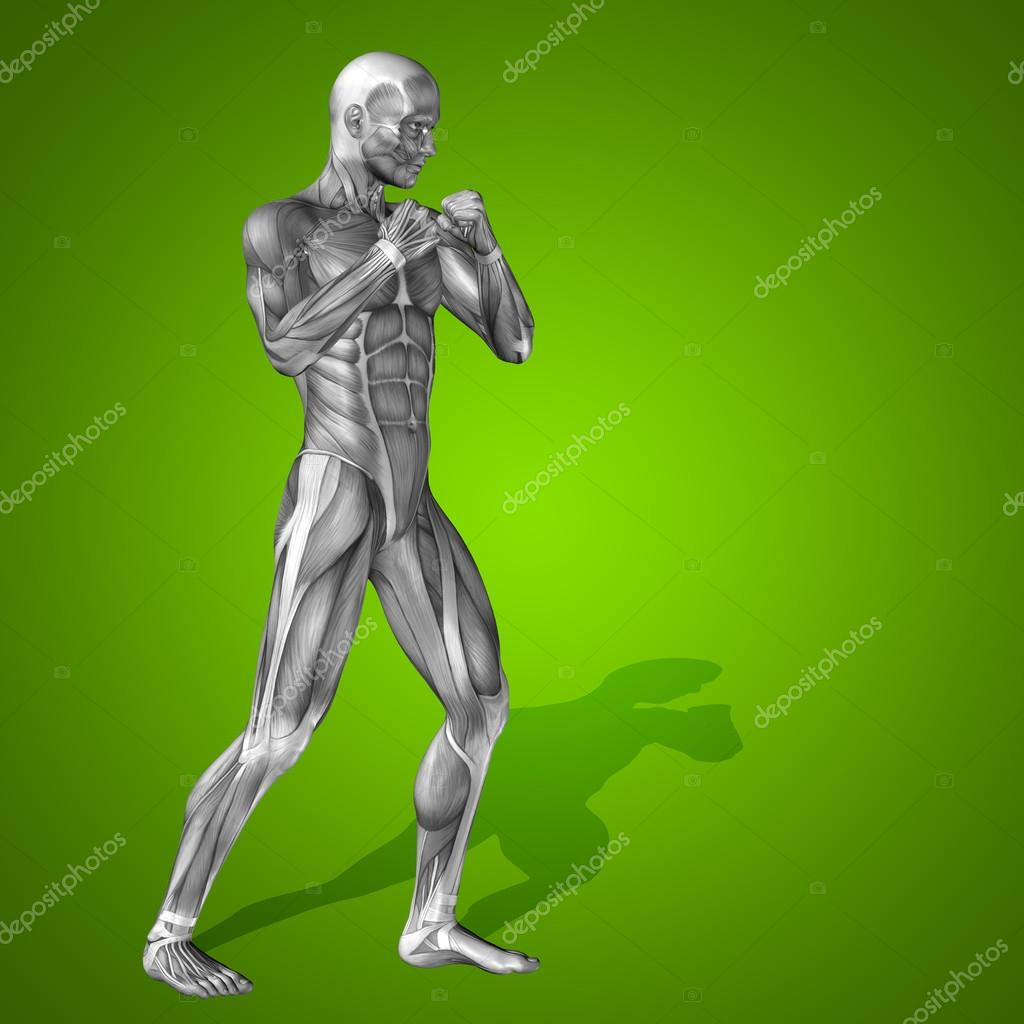 Concepto fuerte hombre humano 3d anatomía cuerpo con el músculo para ...