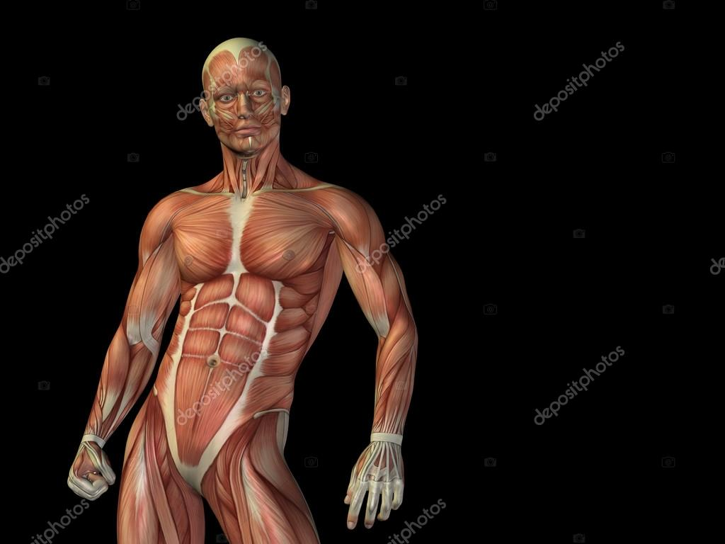 Concept or conceptual stong human or man 3D anatomy upper body with ...