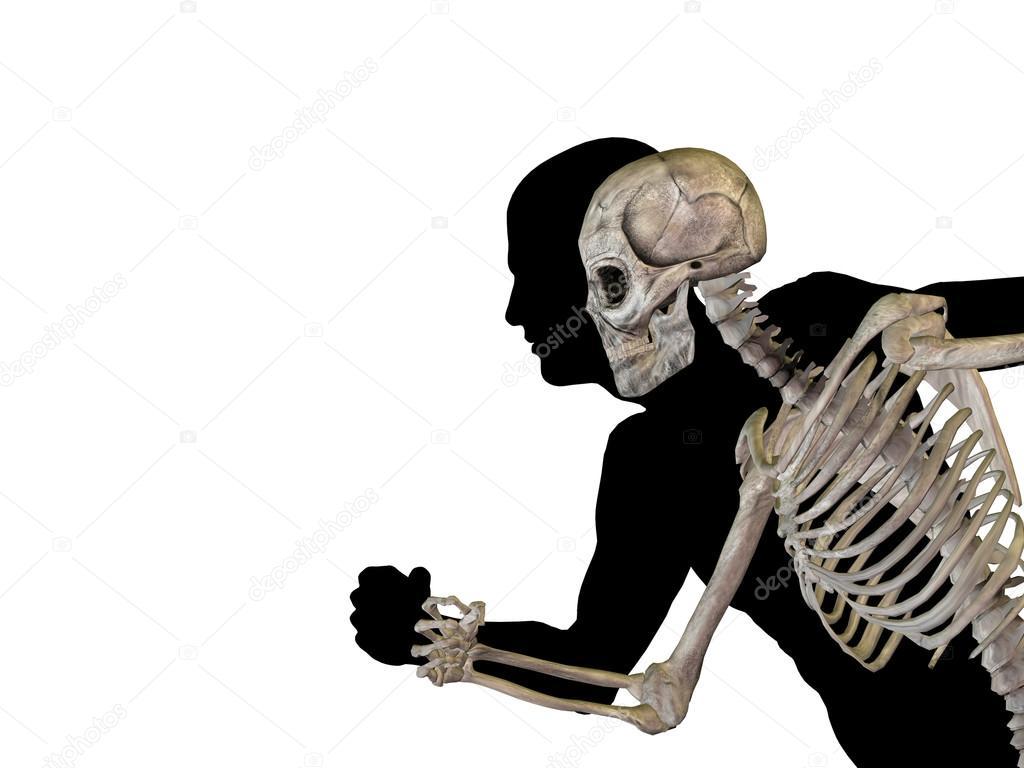 Mensch oder männlich 3d anatomie mit Knochen oder Skelett und ...