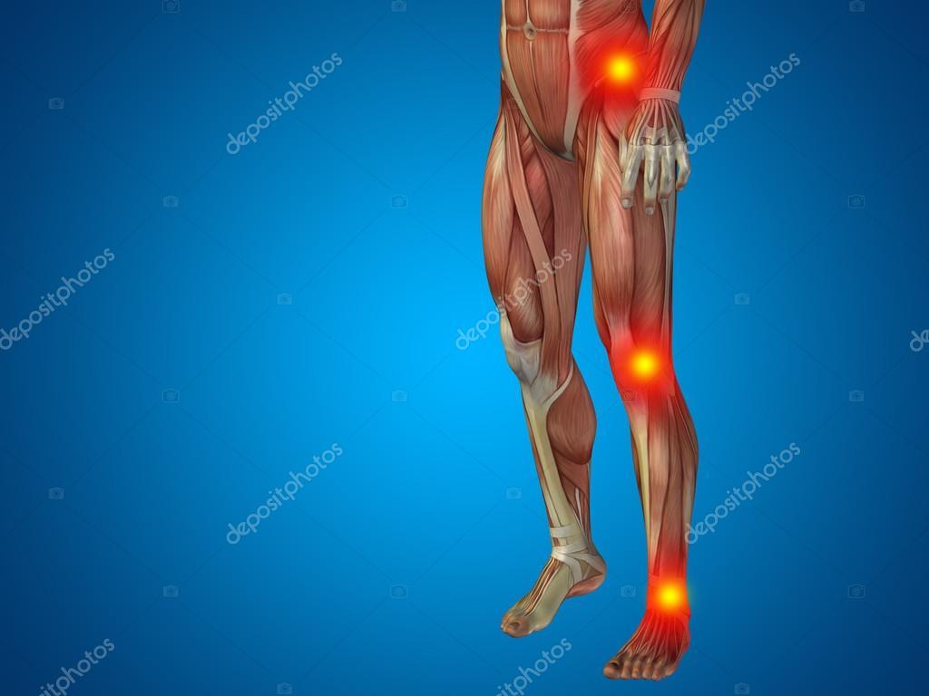 menschliche Anatomie Unterkörper — Stockfoto © design36 #88930852