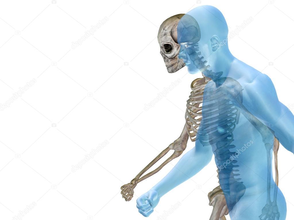 Anatomía 3d humana u hombre con huesos o esqueleto y cara o cráneo ...
