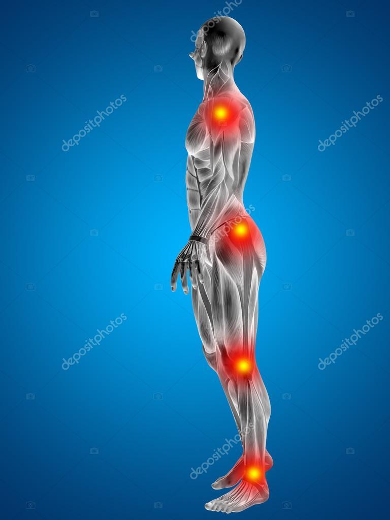 3D humanos u hombre con músculos para diseños de anatomía o salud ...