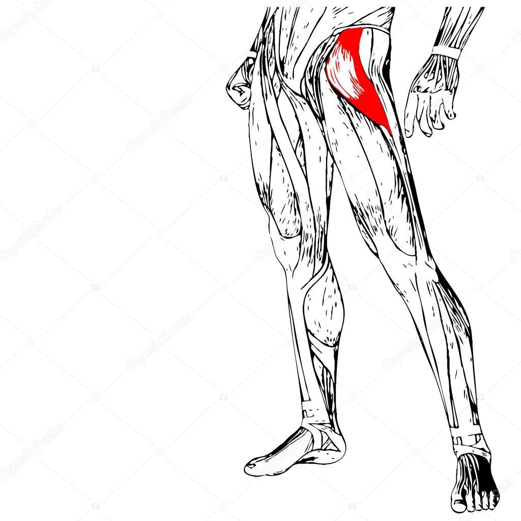 Anatomía de las piernas humanas — Fotos de Stock © design36 #94586140