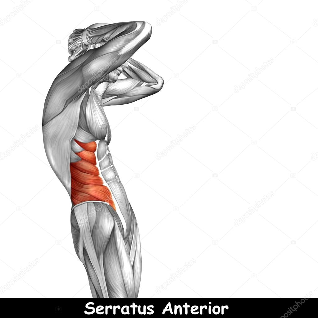 Konzept oder konzeptionelle 3D-Brust menschliche Anatomie oder ...