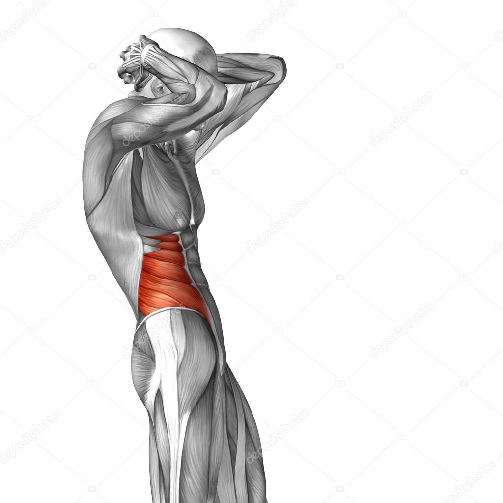 Menschliche Anatomie der Brust — Stockfoto © design36 #94589656
