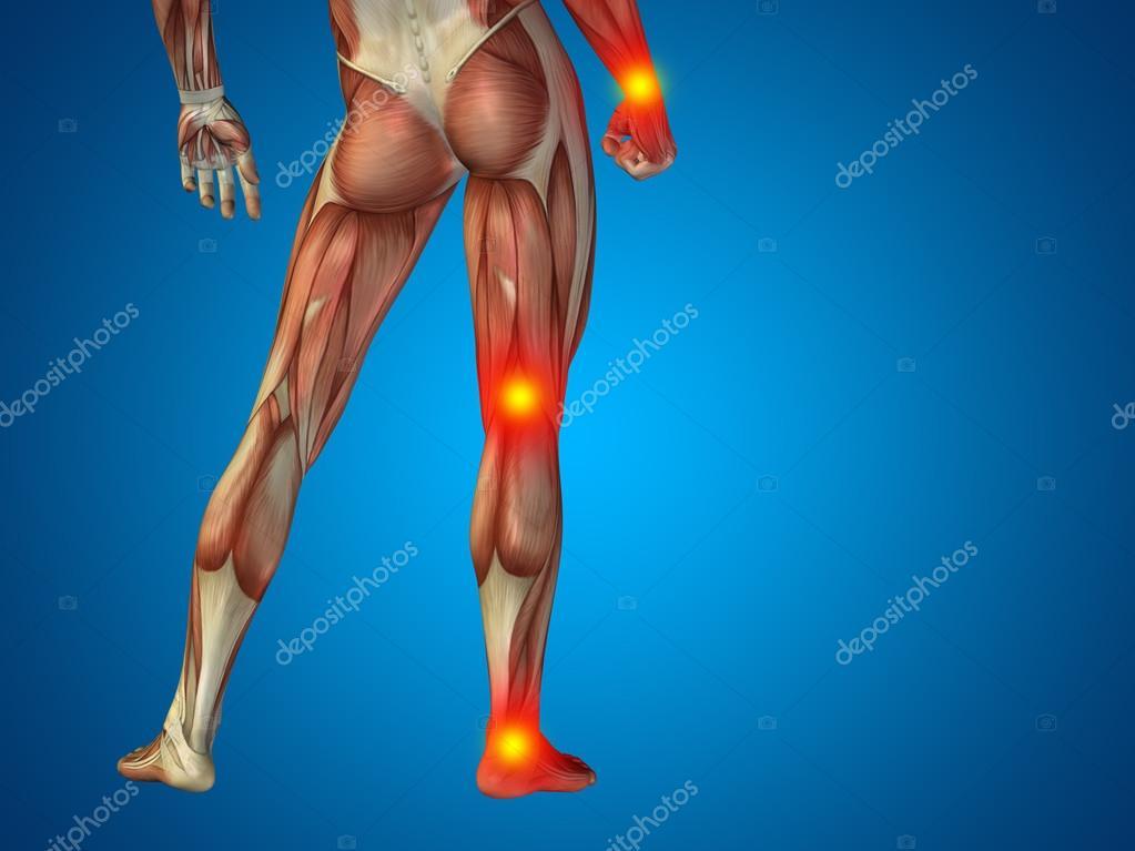 Parte inferior del cuerpo de la anatomía del hombre — Fotos de Stock ...