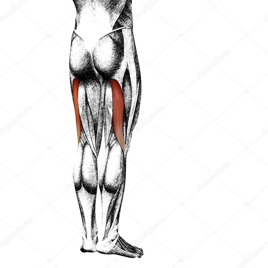 schizzi anatomia