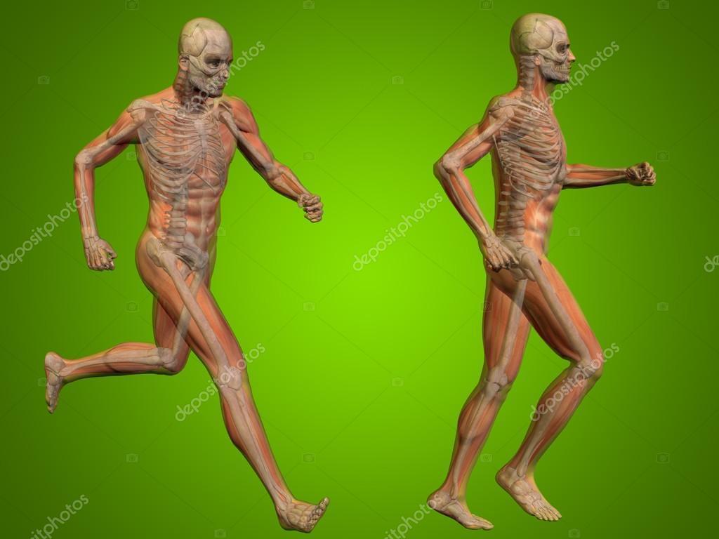 Human Man Or Male Skeleton Anatomy Stock Photo Design36 94594482