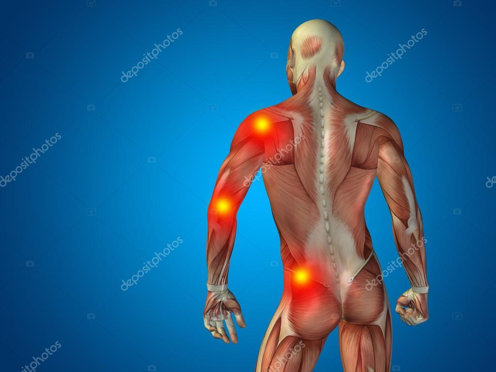 man anatomy upper body — Stock Photo © design36 #94594532