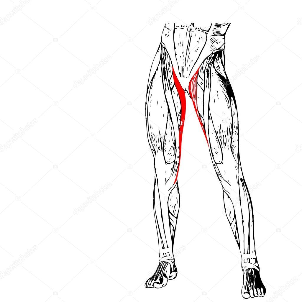 Anatomie der menschlichen Beine — Stockfoto © design36 #94594932