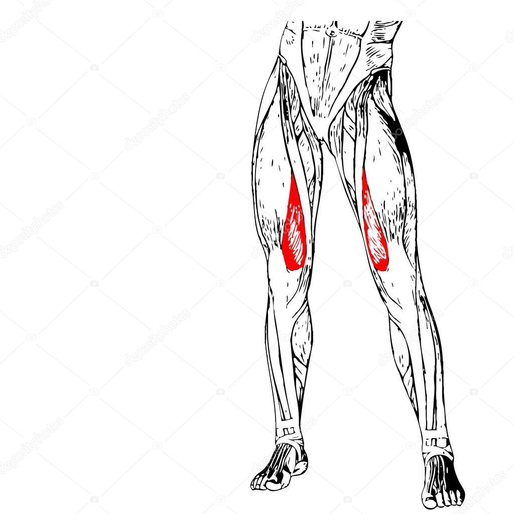 Anatomie der menschlichen Beine — Stockfoto © design36 #94595008