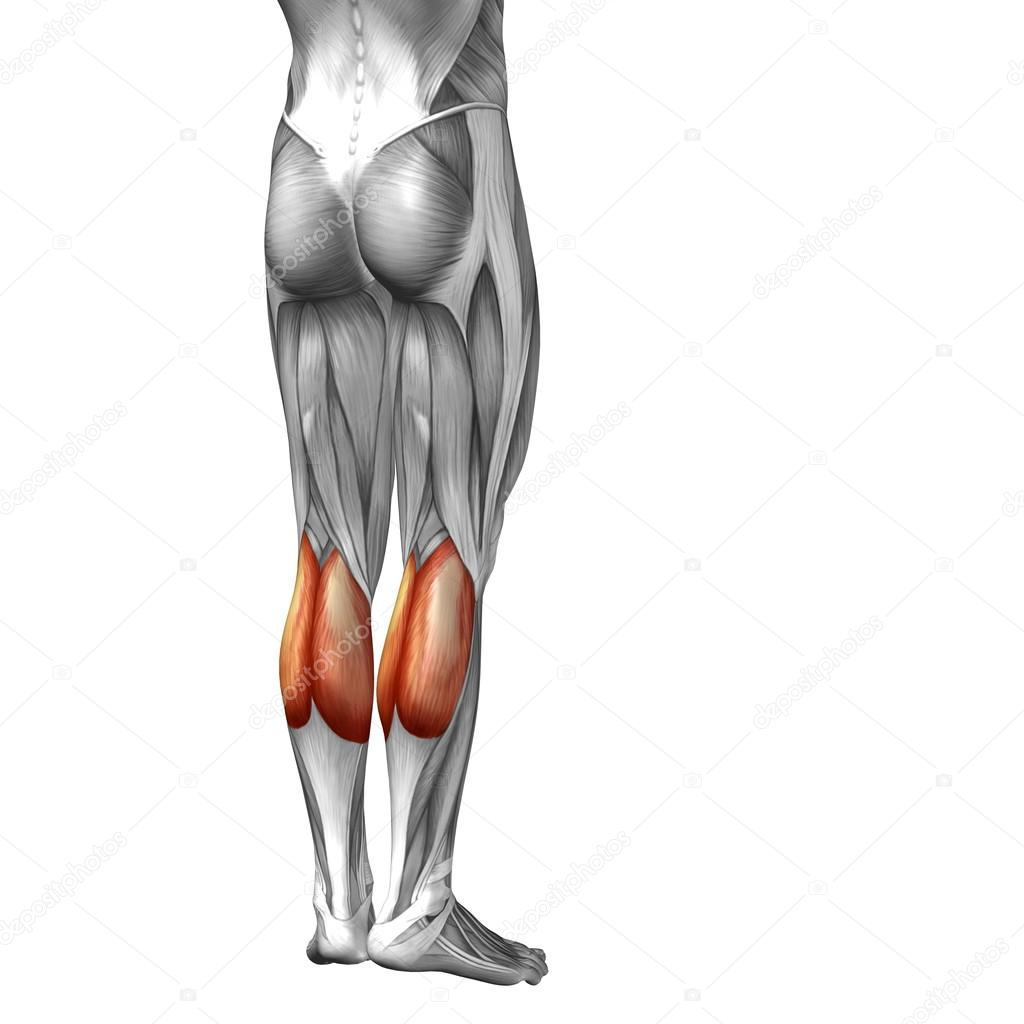 Konzeptionelle 3d menschlichen Unterschenkel Anatomie oder ...