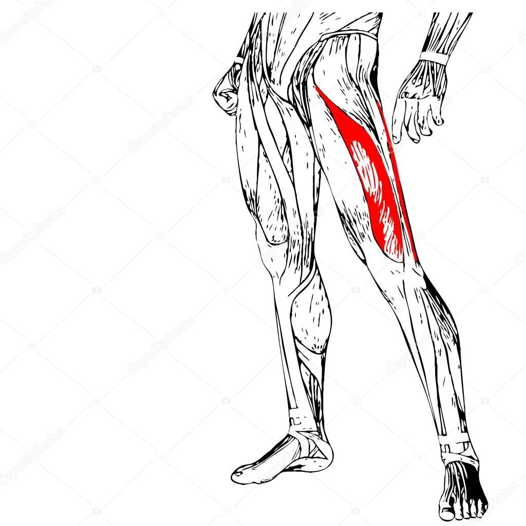 Anatomía de las piernas humanas — Foto de stock © design36 #94601296