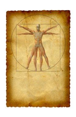 conceptual vitruvian human body