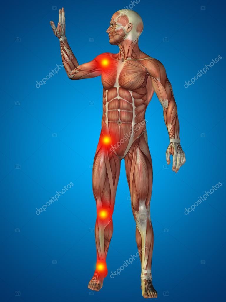 Menschlichen oder Mann mit Muskeln — Stockfoto © design36 #95385710