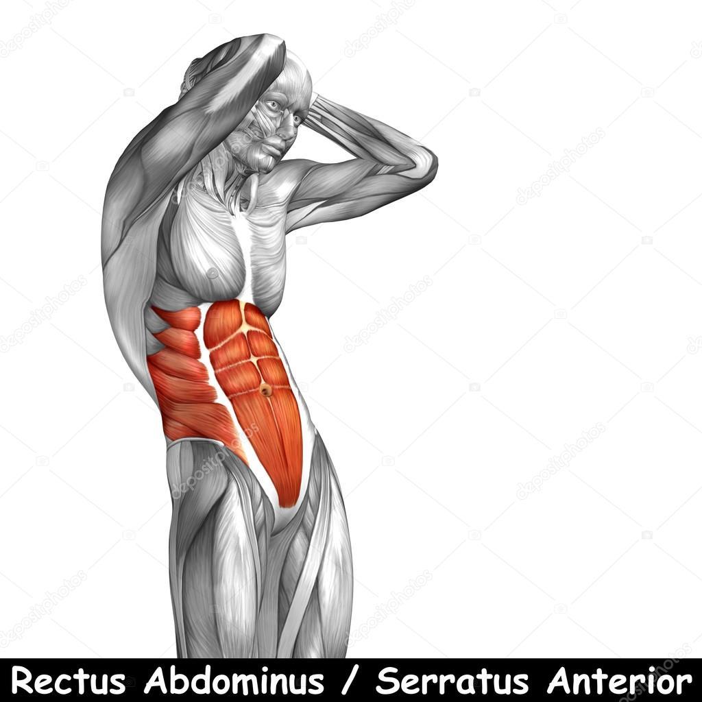 Menschliche Anatomie der Brust — Stockfoto © design36 #95391854