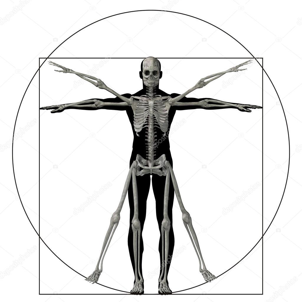 Anatomía de proporción humana — Foto de stock © design36 #96271888